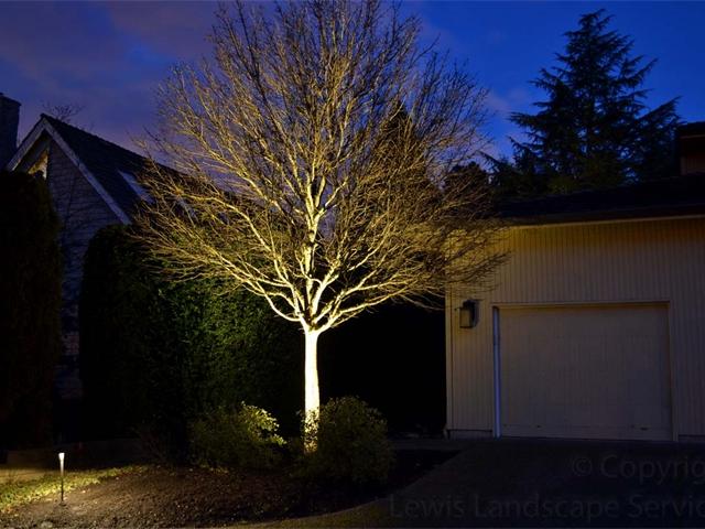 Tree Uplighting / Landscape Lighting at at Lighting Job in Portland