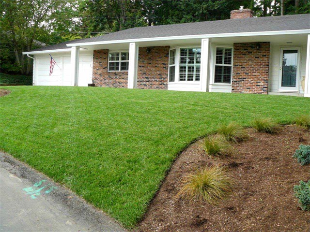 New Sod Lawn, 3 Weeks After Installation