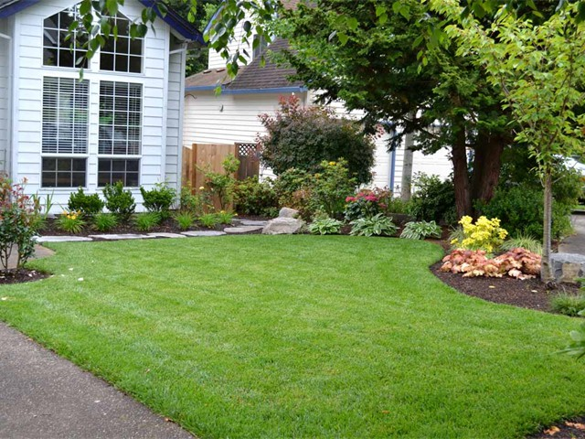 New Sod Lawn, 1 Month After Installation