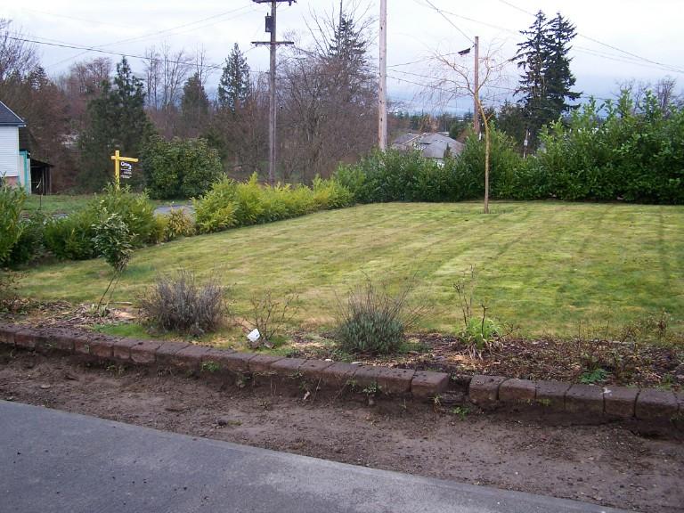 Before-after-landscape-renovation 002