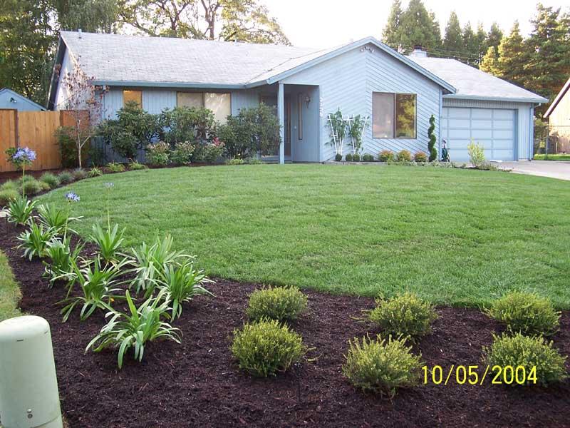 Before-after-new-landscape-irrigation 001