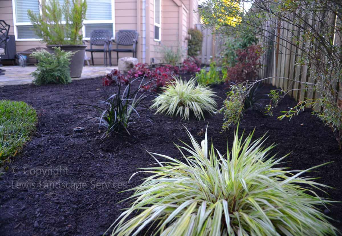 Back Yard Planting
