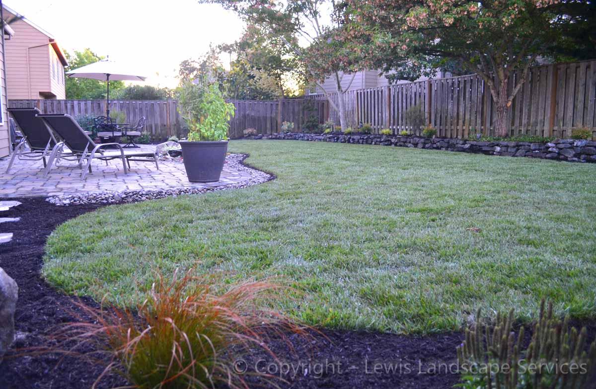 New Sod Lawn, Back Yard