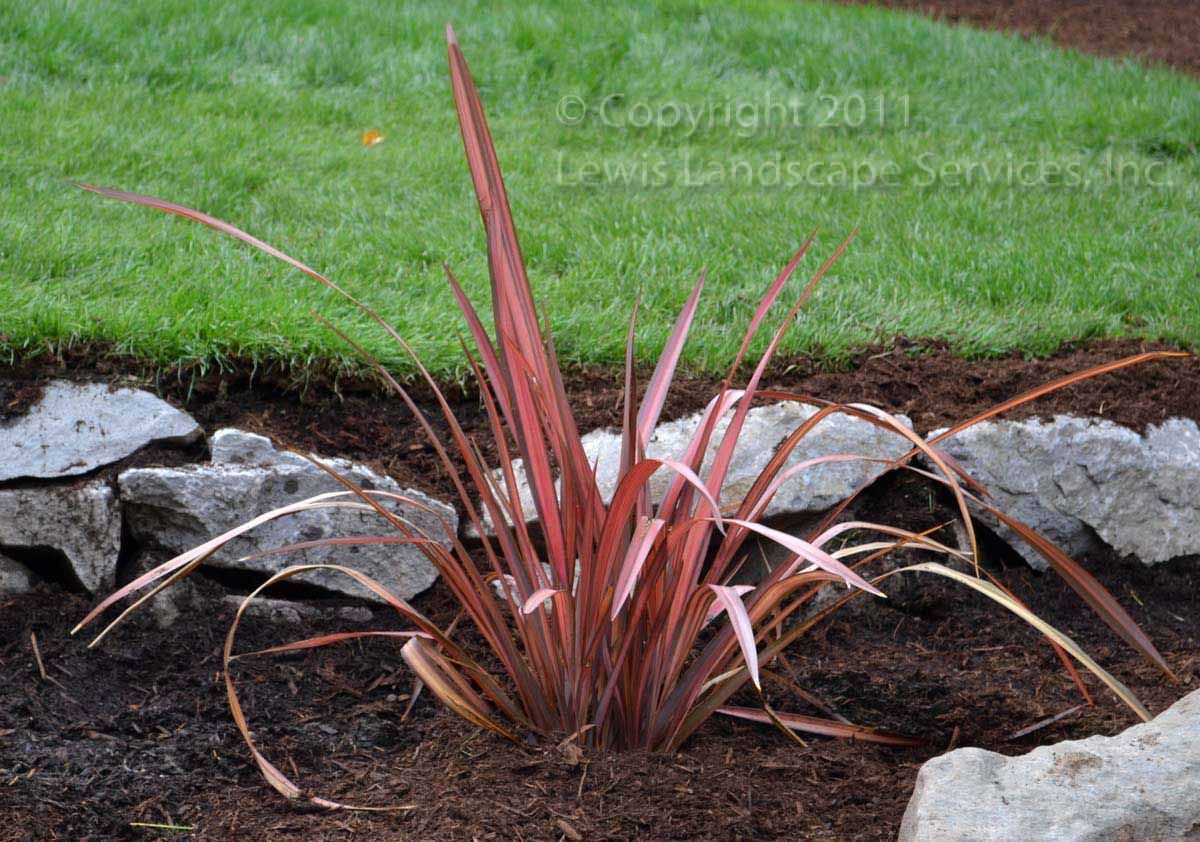 Full-landscape-projects-odonnell-project-fall-2011 013