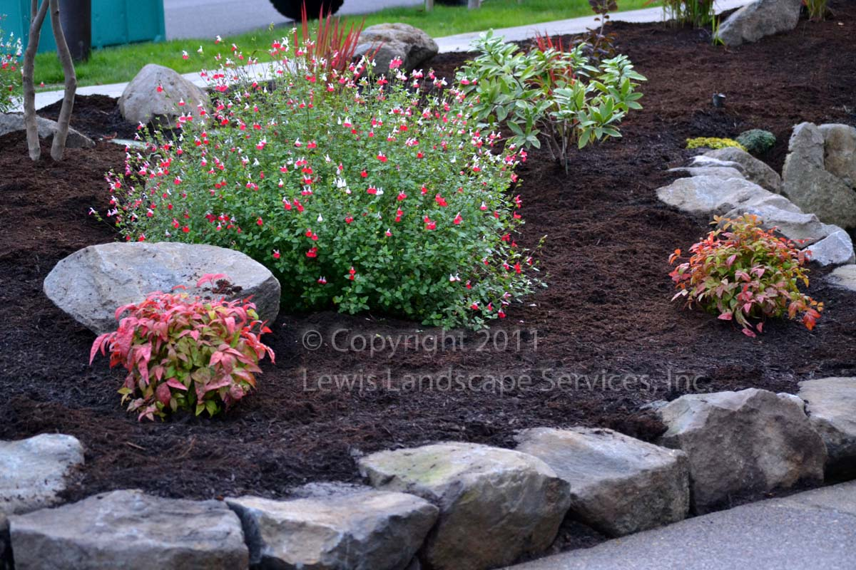 Full-landscape-projects-odonnell-project-fall-2011 019
