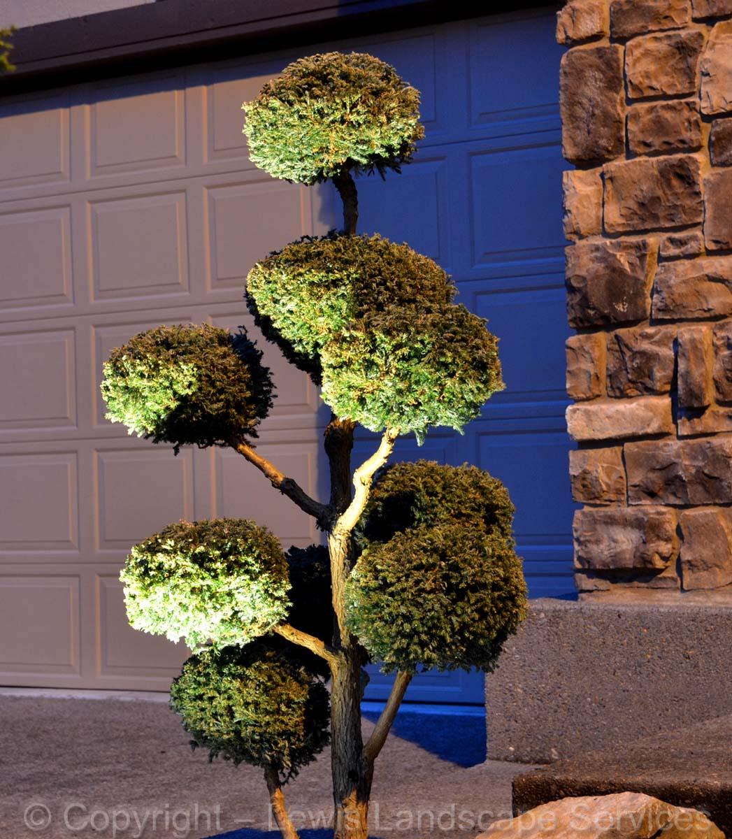 Pom-Pom Bonsai Tree with Night Lighting