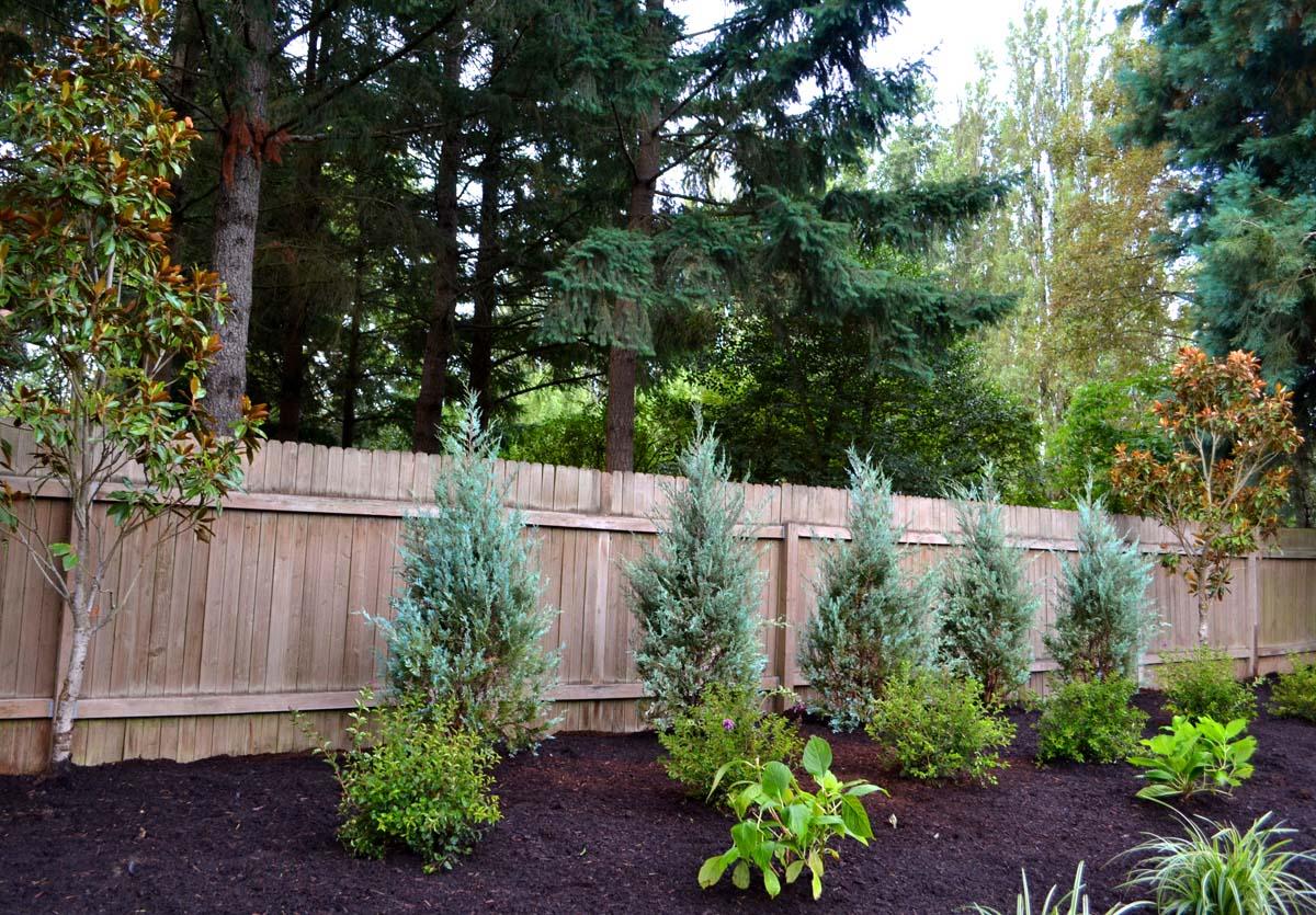 New Plants & Trees