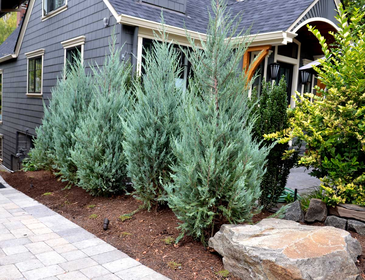 Full-landscape-projects-shanaberger-project-summer-15-front-yard-paver-driveway 003