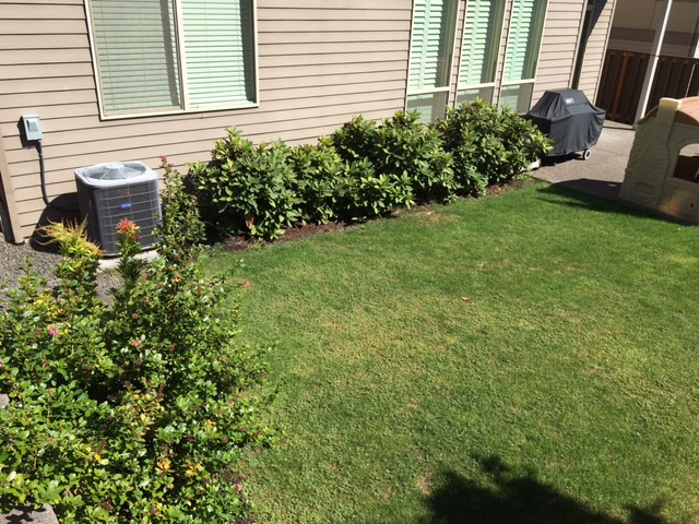 Full-landscape-projects-stevens-project-summer-16-before-photos 002