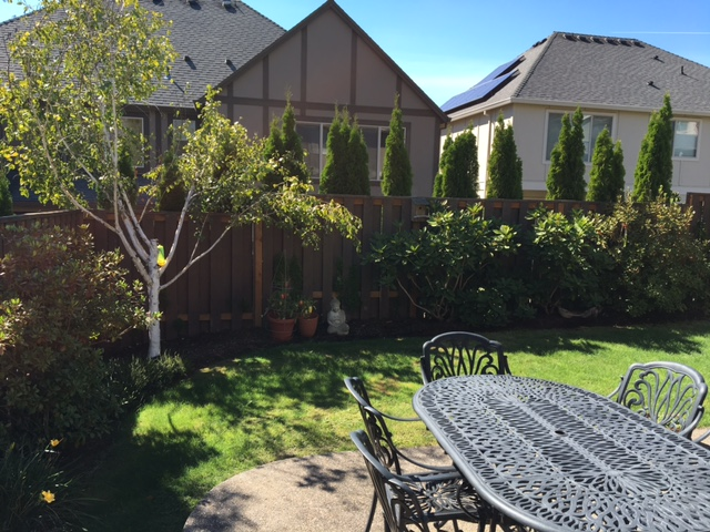 Full-landscape-projects-stevens-project-summer-16-before-photos 005