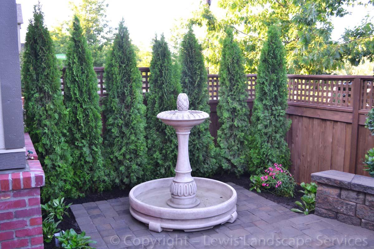 New Arborvitae, Fountain