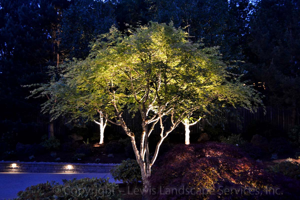 Tree Uplighting with Low-Voltage LED Spotlight at a Project in Portland