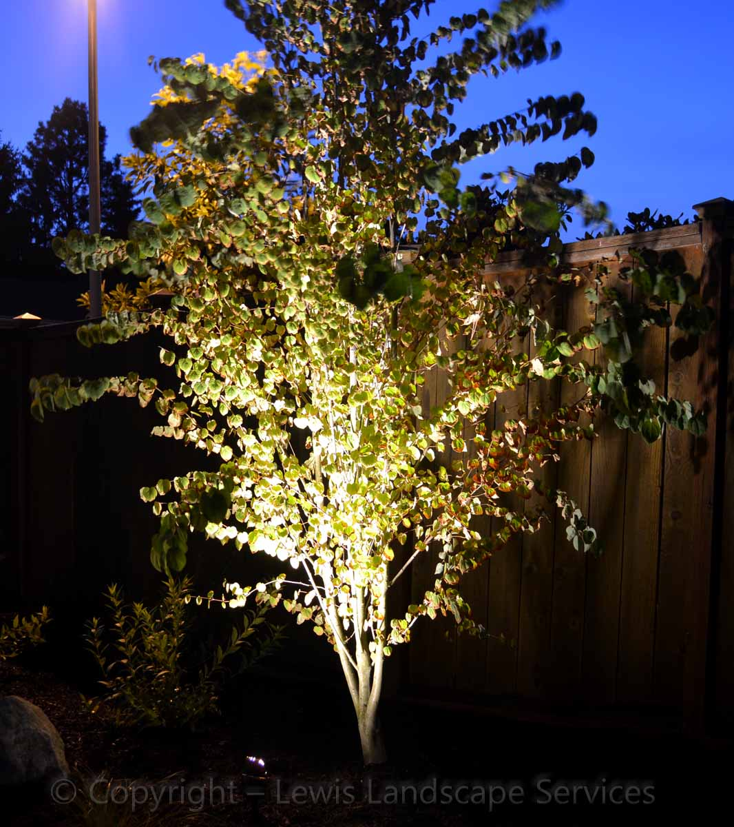 Outdoor-landscape-architectural-lighting-johnson-project-summer-2012 007