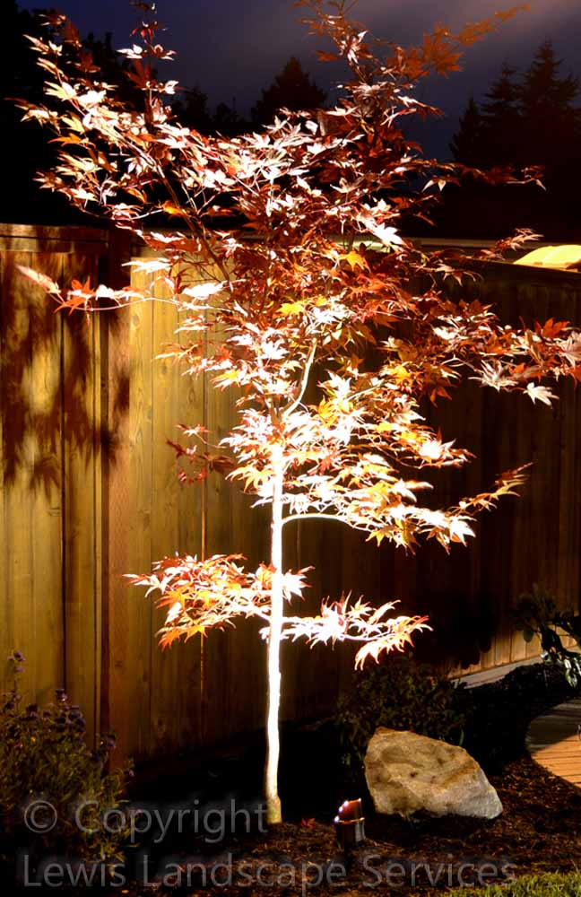Outdoor-landscape-architectural-lighting-johnson-project-summer-2012 010