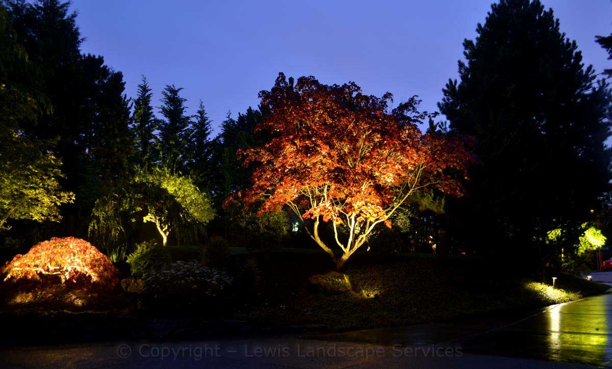 Tree Uplighting at this Night Lighting Installation We Did in NW Portland, Oregon