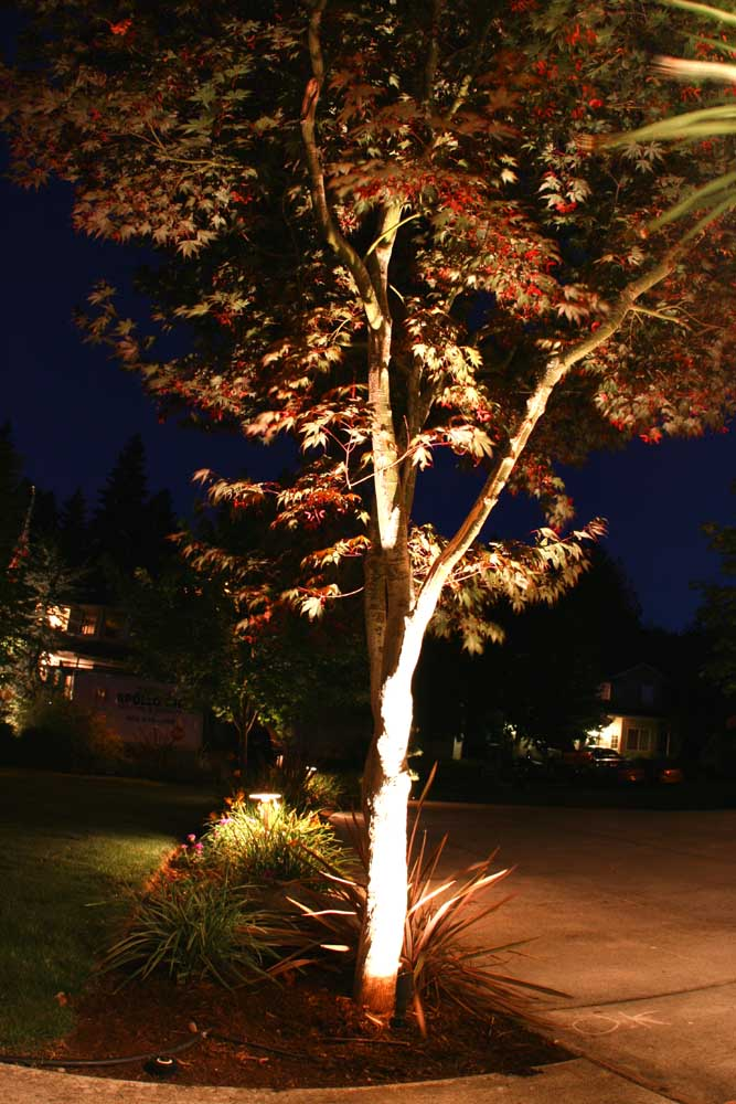 Outdoor-landscape-architectural-lighting-outdoor-lighting-project-in-beaverton-fall-2007 006