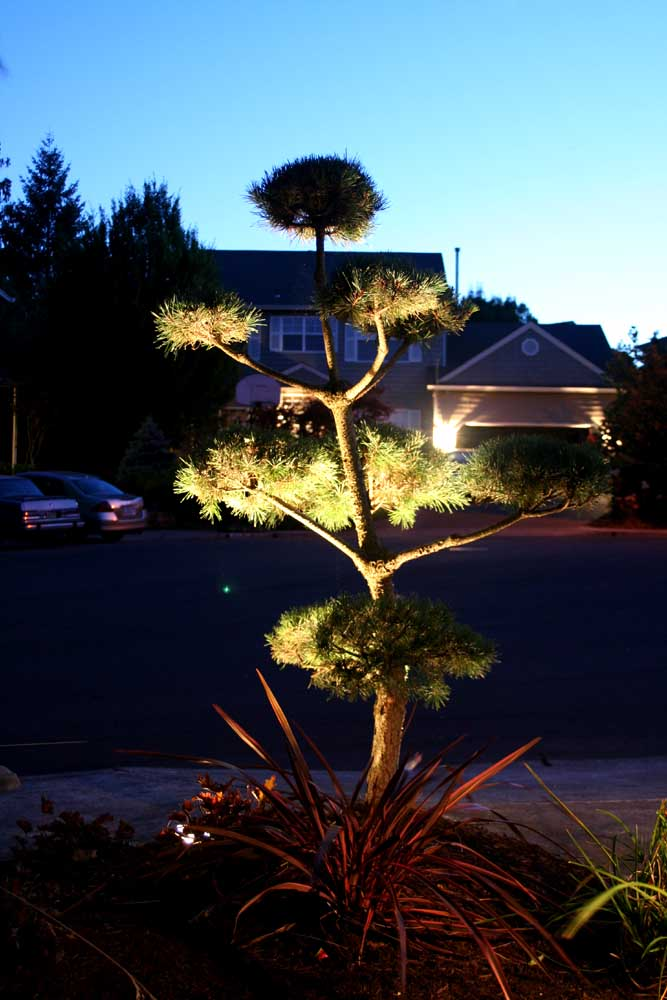 Outdoor-landscape-architectural-lighting-outdoor-lighting-project-in-beaverton-fall-2007 008