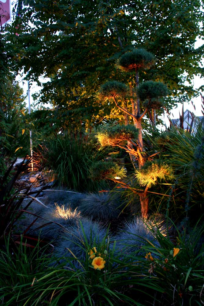 Outdoor-landscape-architectural-lighting-outdoor-lighting-project-in-beaverton-fall-2007 013