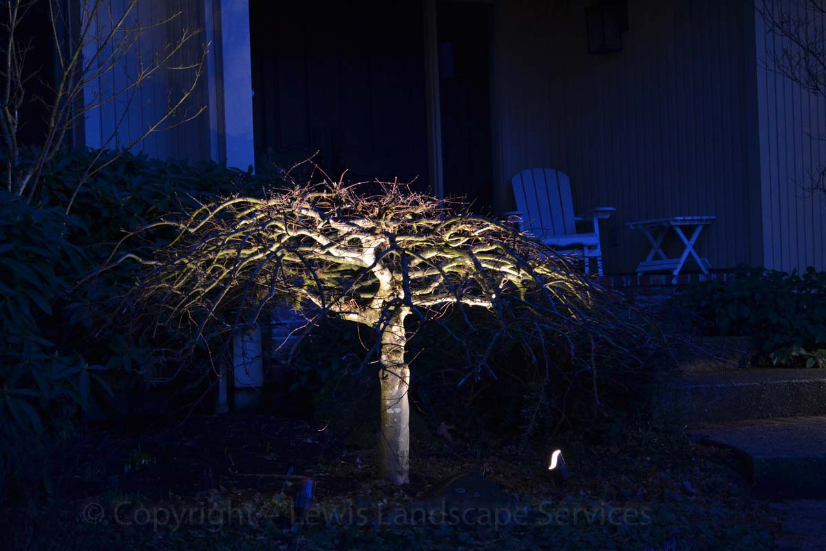 Outdoor-landscape-architectural-lighting-stuver-project-winter-2013 006