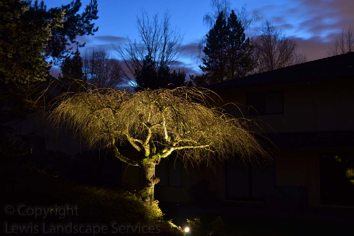 Outdoor-landscape-architectural-lighting-stuver-project-winter-2013 007