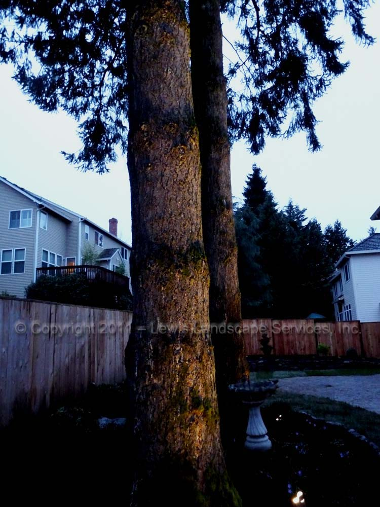 Outdoor-landscape-architectural-lighting-tualatin-project-spring-2011 008