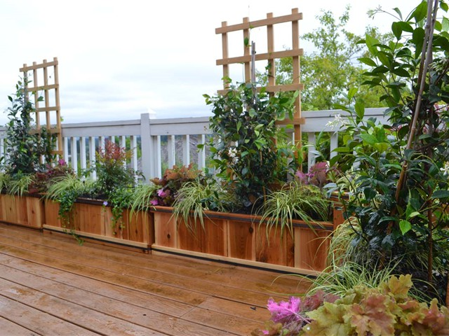 Custom Planting in Planting Boxes