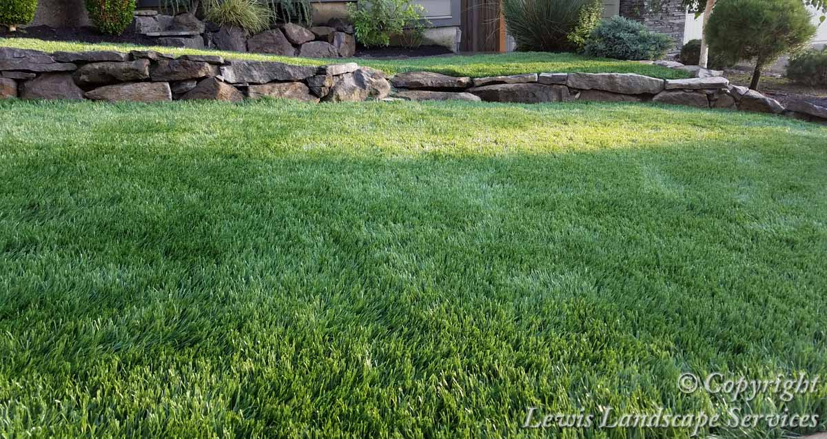 Synthetic-turf-artificial-turf-putting-greens-installations-anderson-project 003