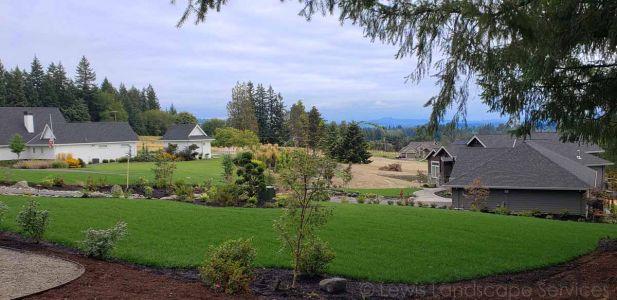 New Sod Lawn, Plants & Trees