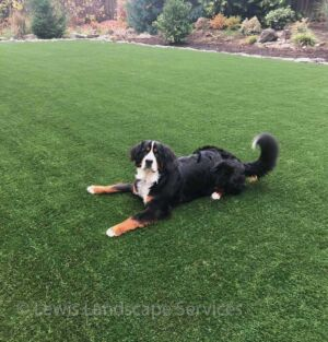 Synthetic Turf is GREAT for Dogs!
