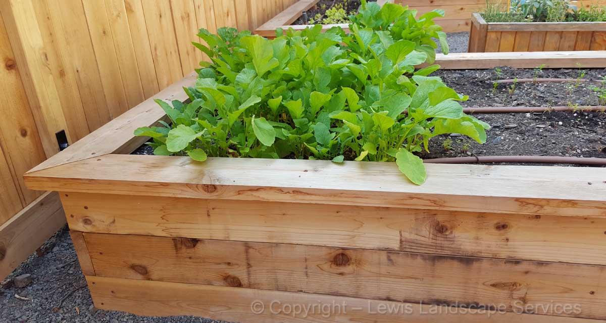 Cedar Raised Beds Garden Boxes Portland, Oregon